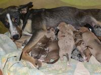 Alles neu macht der Frühling: Tierbabys fluten Tierheime