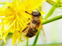 Bienen retten leicht gemacht!