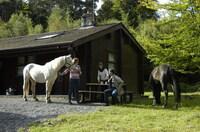 Mein Haus, mein Pferd