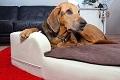 Besonderheiten der orthopädischen Hundebetten