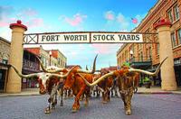 Fort Worth feiert 20 Jahre Cattle Drive