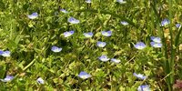 Gärtner Pflegetipps für den schönen Rasen in Stuttgart