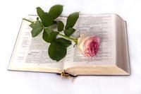 Verschenken Sie eine Bibel für Kinder!