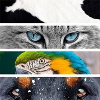 Informative Tiervideos bei TierklinikenNet