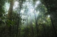 Künstliche Regenwälder