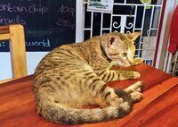 Tierfreunde berichten aus der Welt von Hund & Katze