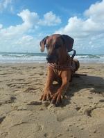 Ferien mit Hund brauchen Planung