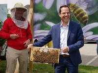 Fleißige Bienchen - Wolf begrüßt rund 60.000 neue geflügelte Mitarbeiter
