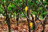 Forum Nachhaltiger Kakao mit neuer Zielsetzung