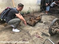"""""""Wie ein Gang durch die Hölle...""""?  - Indonesien: Hunde und Katzen grausam erschlagen und anschließend verbrannt"""