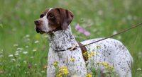Tierarzt (Baden-Baden): Kennzeichnung macht Sinn