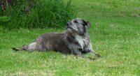 Tierarzt Region Karlsruhe / Rastatt: Keine Tiere verschenken