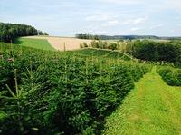 Nachhaltiger Weihnachtsbaumanbau in Deutschland