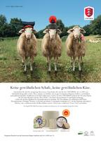 3 Peccorini - Italienische Schafkäse erobern deutsche Theken