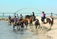 Campingferien zu Pferd