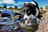 Sommerurlaub mit Hund ohne Badespass? - Nein danke!