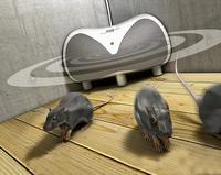 showimage Die Maus muss raus aus dem Haus