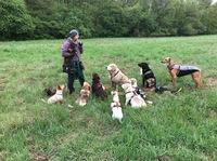 showimage Neuer Start von Sanny's Dogwalker Ausbildung April 2020
