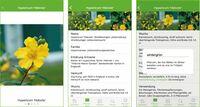 Interaktive Lern-App für Azubis im Garten- und Landschaftsbau