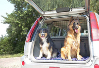 showimage Hundeelend: Überhitzte Autos sind eine Qual für Vierbeiner