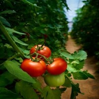 Organischer Dünger aus Pferdemist - der ideale Biodünger