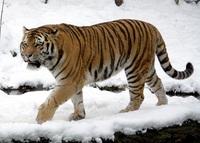 Männer Power: Erwecke den Tiger in Dir