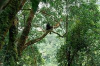 Regenwälder müssen geschützt werden!