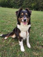Vermittlung der beschlagnahmten Eifel-Hunde hat begonnen