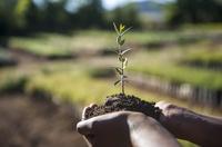 Kampagne: Zwei Millionen Baumsetzlinge für Äthiopien