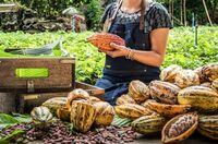 Bessere Existenzgrundlage für Kakaobauern