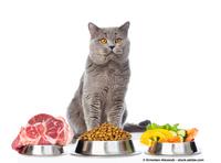 Sie haben eine wählerische Katze? Sie suchen eine Lösung?