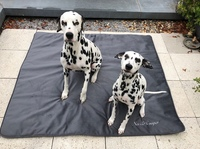 Antiallergische Hundedecken