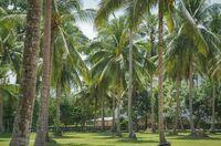 Erfolge bei der Palmöl-Zertifizierung