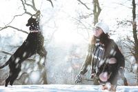 Winterurlaub und Skiurlaub mit Hund auf hunde-urlaub.net