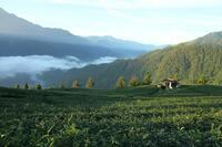Formosa Tee - Die Geschmacksvielfalt Taiwans erleben