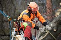 Baumpflege kurz erklaert - von Albrecht Buehler