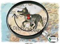 Vorsicht beim Autofahren: Jungwölfe sind jetzt auf Wanderschaft