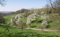 400 junge Obstbäume für den Naturpark Obst-Hügel-Land