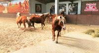 Gut Aiderbichl ist letzte Heimat für Zirkuspferde