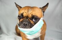 Hundehalter und Corona: Heimathund-Shop hilft Vierbeinern in Quarantäne