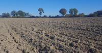 AGRAVIS-Experten zur Trockenheit in einzelnen Regionen