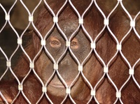Covid-19: Infektionsrisiko Zoo