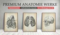 Einzigartige Anatomie Bilder für jeden Verwendungszweck