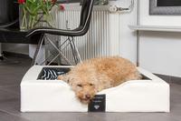 Reines Relaxen für unsere Hunde