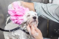 4 Gründe für die Hundewäsche mit professionellem Hundeshampoo