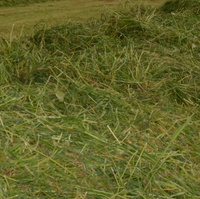 AGRAVIS-Umfrage: Erster Grasschnitt 2020 durchwachsen