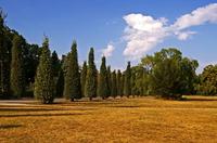 EMIKO setzt auf Mikroorganismen als wirksames Mittel gegen Trockenstresssymptome in Gärten und auf kommunalen Flächen