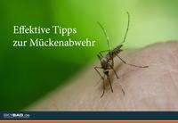 Hallo kalte Dusche, tschüss nervende Mücken!