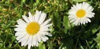 Naturhormone: Arzt aus Schwäbisch Gmünd informiert