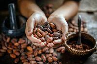 Gemeinschaftliche Kontrolle des Kakaoanbaus
